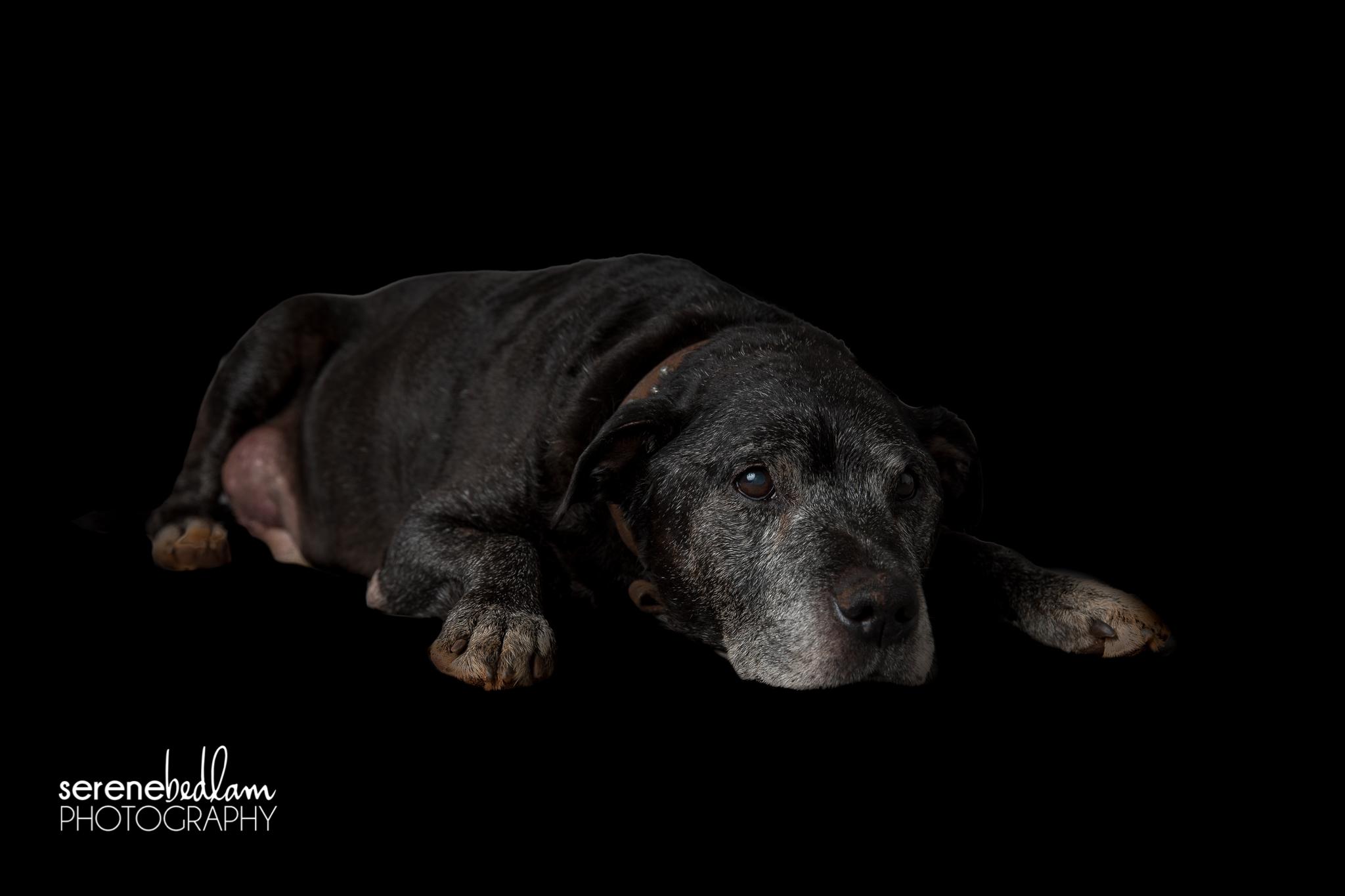 Newman Studio Pet Photography Serene Bedlam Studios